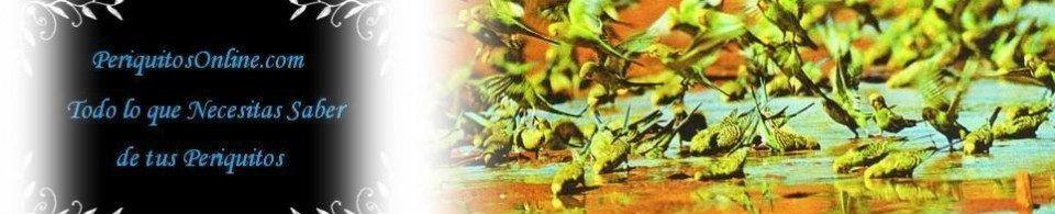 PeriquitosOnline.com-Periquitos australianos