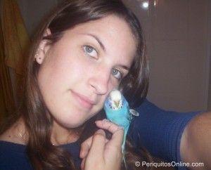 000 09971 300x242 Mis fotos de periquitos australianos