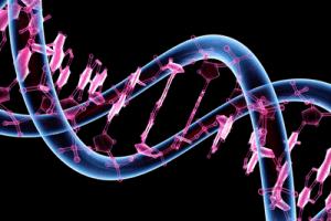 conceptos genetica periquitos